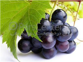 انگور رطبی