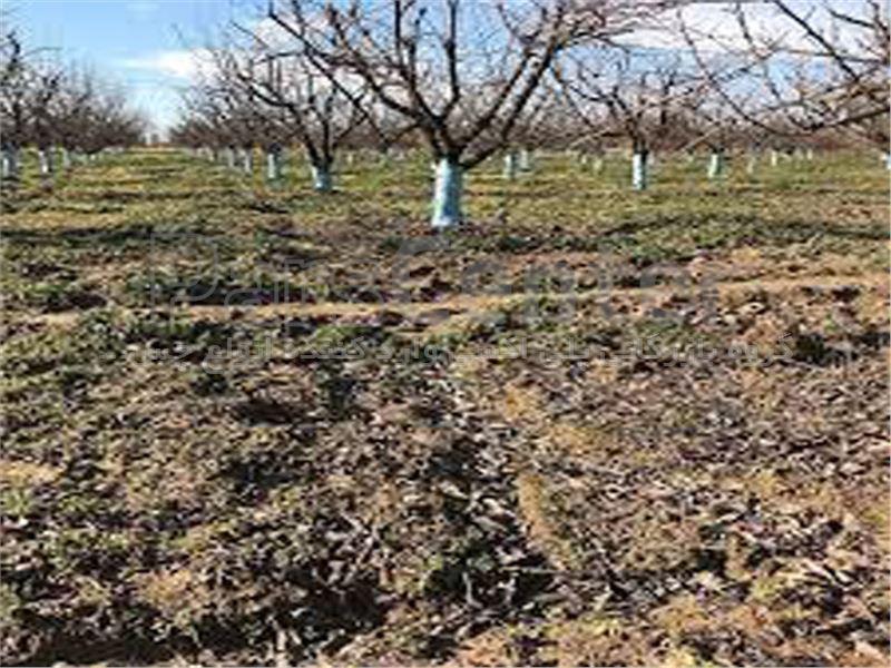 چسب باغبانی و هرس 12 کیلویی تارانتولا