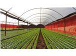 پلاستیک  گلخانه سه لایه 10متری با یووی 5درصد