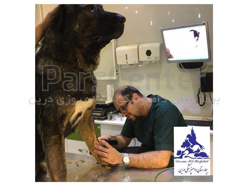 تشخیص و درمان بیماریهای حیوانات خانگی ،بیمارستان دامپزشکی درین