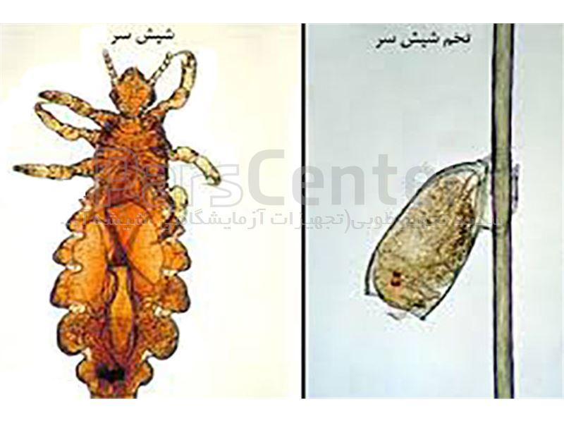 دستگاه دفع شپش و حشرات موذی