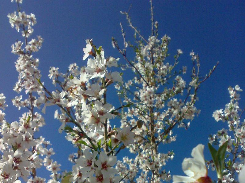باغ سرای توریستی و خانوادگی و گلاب باباعلی نیاسر