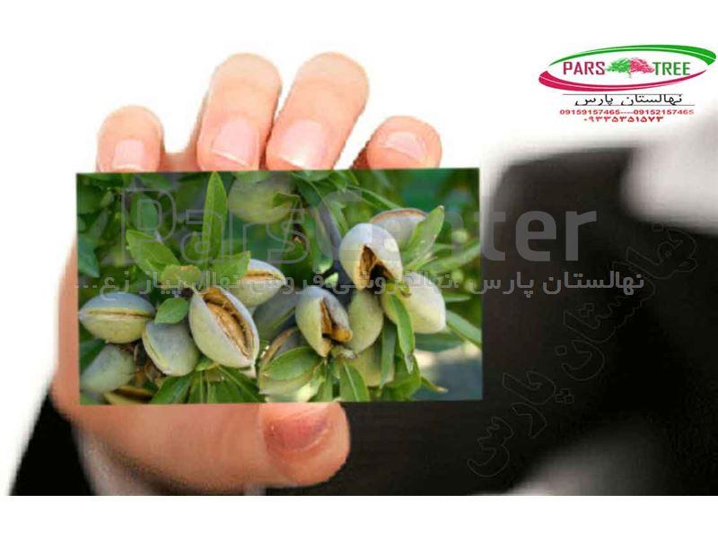 #بذر بادام تلخ، #قیمت بادام تلخ