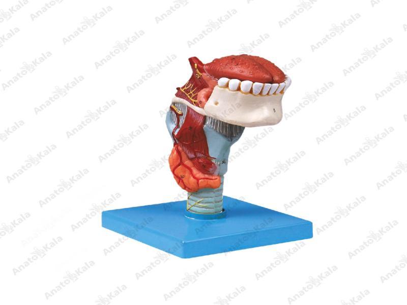 مولاژحنجره با زبان و دندان