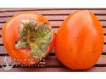 انواع نهال خرمالو - Persimmon seedlings