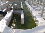 ساخت استخر پرورش جلبک با ورق ژئوممبران، سازمان پژوهش های علمی و صنعتی ایران