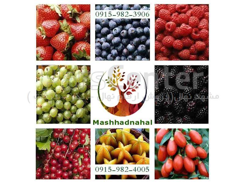 فروش ارقام مختلف نهال های میوه به صورت گلدانی