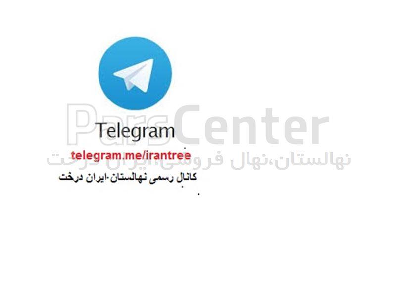 کانال+تلگرام+گیاهان+آپارتمانی