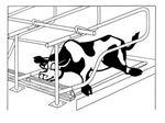 تشک گاو(cow mat)