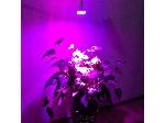 لامپ رشد گیاه ۱۲ وات