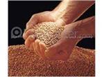 فروش بذر انواع درختان مثمر#بذر گلابی#بذر سیب#بذر شفتالو#بذر زردآلو# تزئینی