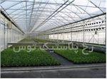 دوپوش( پوشش دوم سقف گلخانه)