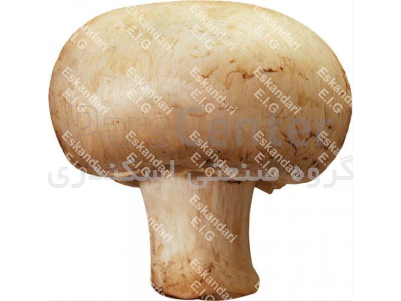 خاک پوششی و خاک پیت مخصوص قارچ دکمه ای – قارچ خوراکی