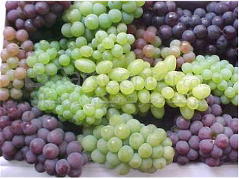 فروش و صادرات کنسانتره انگورسفیدو انگور قرمز