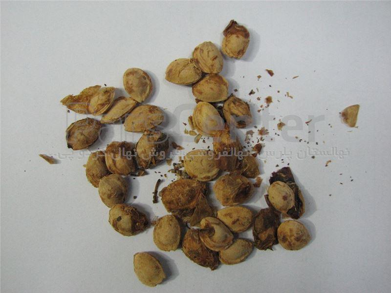 بذر بادام تلخ،بذر گلابی،بذر آلوچه،بذرتوت،نهالستان پارس