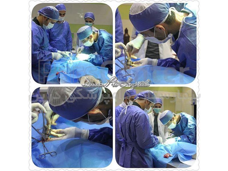 جراحی و ارتوپدی حیوانات خانگی درین
