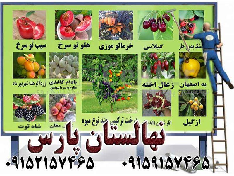 اصلاح و پیوند زنی نهالستان # باغات میوه