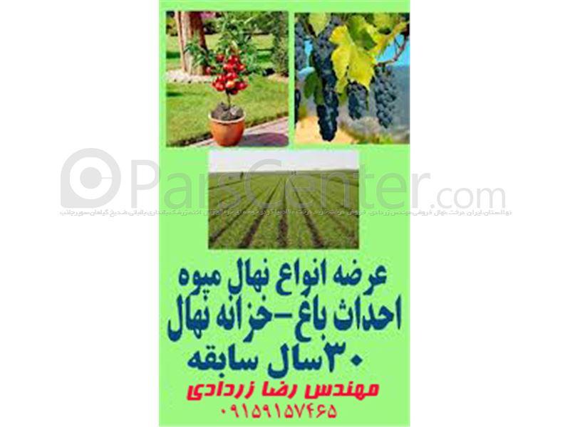 کاشت درخت گردو،کاشت درخت انبه،کاشت درخت آلبالو،کاشت داشت برداشت،کاشت درخت مو،کاشت درخت انگور،کاشت درخت،کاشت درخت سیب