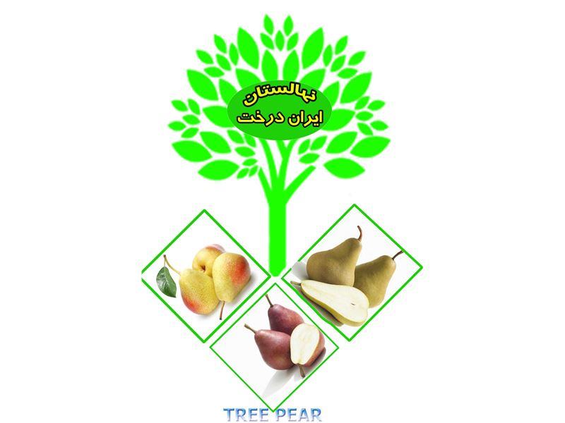 Nursery Pars | shop seedlings | fruit tree | seed flats, pharmaceutical