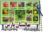 درخت تاغ،Nursery tree pars