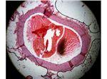 ویدیو میکروسکوپ هوشمند
