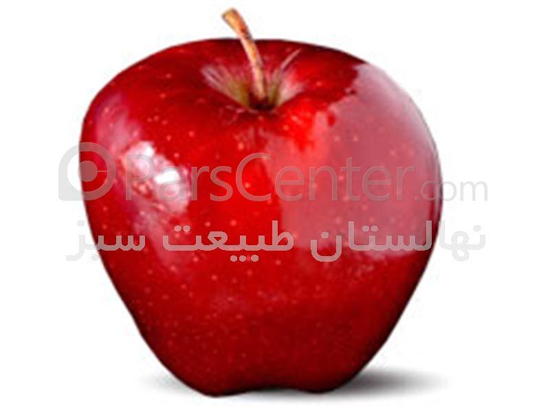 شرکت گل و گیاه و نهال طبیعت سبزمیاندوآب - شرایط احداث باغ سیب