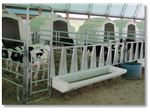 تولید کننده انواع باکس های نگهداری گوساله و آبخوری های دامداری ها