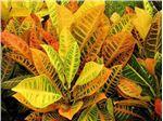 برطرف کننده زردی گیاهان آپارتمانی