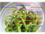 برگزاری دوره های کشت بافت گیاهی - زیست فناوری و کشاورزی