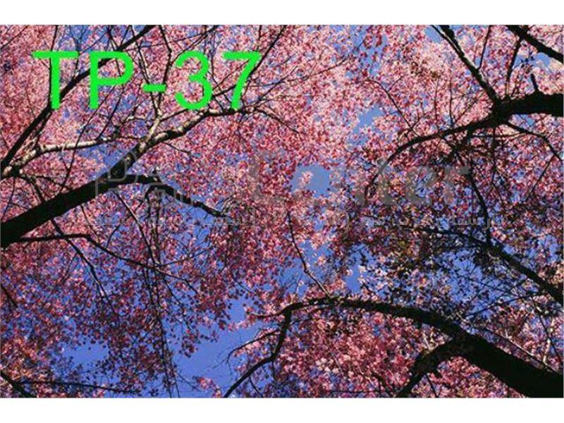 سقف کاذب (طرح درخت)