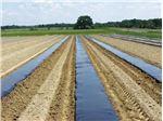 فیلم پوشش مالچ کشاورزی