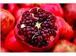 انار،نهال انار رباب نی ریز،درخت انار،Pomegranate
