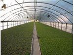 تولیدکننده برتر نایلونهای گلخانه ای تا عرض 14 متر در خاورمیانه