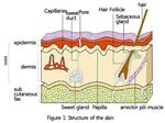 کارگاه های آموزشی مراقبت پوست و مو work shop skin care