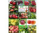انواع نهال سیب-apple