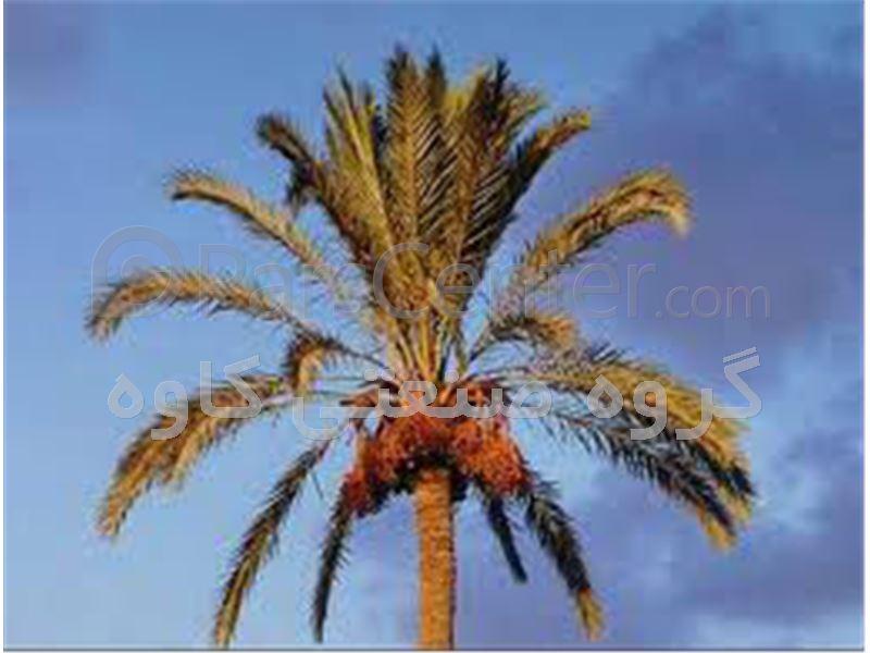 بالابر درخت خرما