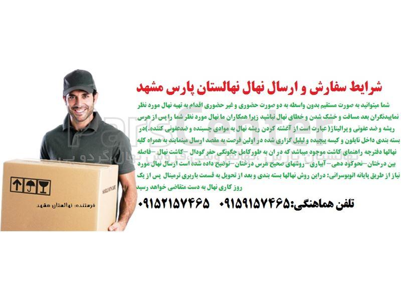 مراحل آماده سازی-بسته بندی و ارسال نهال به شهرستان مجموعه نهالستان پارس