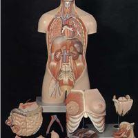 مولاژ یا مدلهای آناتومی