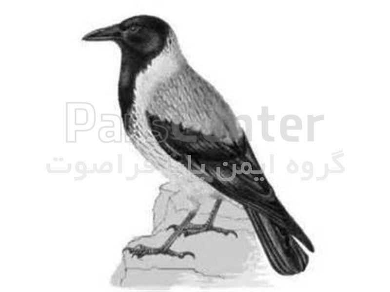 بمب صوتی دفع دائمی کلاغ و کبوتر و گنجشک