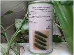 بذر خیار سیمینس