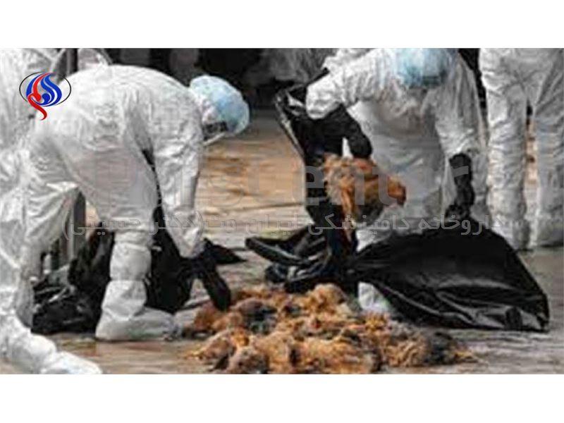 ويروس بيماري آنفولانزا در کشور در حال گردش است، اين ويروس براي طيور خطرات جبران ناپذيري دارد