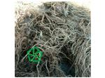 خرید و فروش عمده  ریشه سنبل الطیب(پایار تجارت زمردین)