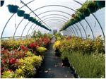 نایلون گلخانه سه لایه 12متری با یووی 10درصد