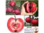 نهال سیب تو سرخ redlove