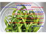 فروش محیط کشت های مختلف گیاهان