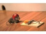 دفع تخصصی موش از مغازه