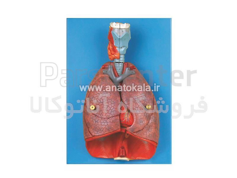 مدل دستگاه تنفس