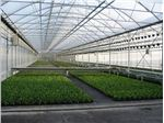 پوشش گلخانه ای سه لایه با عرض 14 متری با یووی 10 درصد