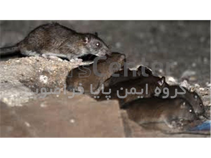 دفع کننده و از بین برنده 100 درصدی سوسک و موش