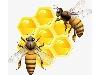 وارد کننده اگزالیک اسید آزمایشگاهی زنبورداری مرک از آلمان